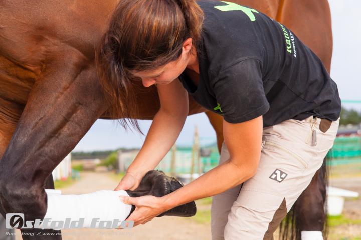 lang rygg hest